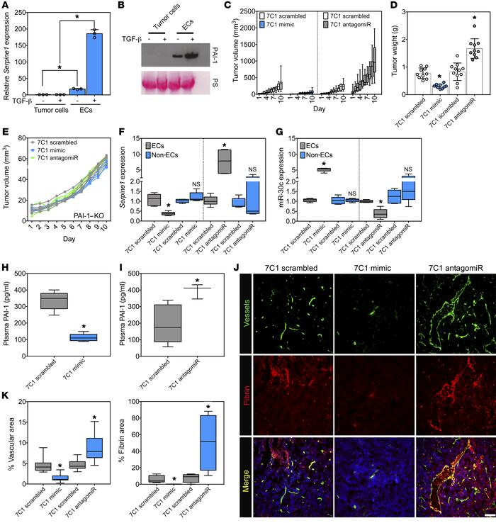 miR-30c gain of function in the endothelium inhibits tumor growth and re...