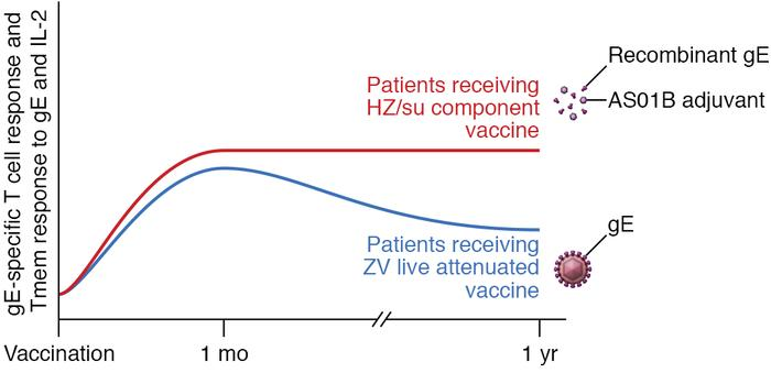 Live attenuated and adjuvanted component vaccines for HZ elicit differen...
