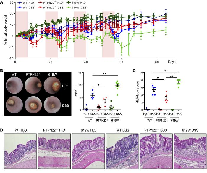 Presence of the 619W variant promotes chronic colitis. Chronic colitis w...