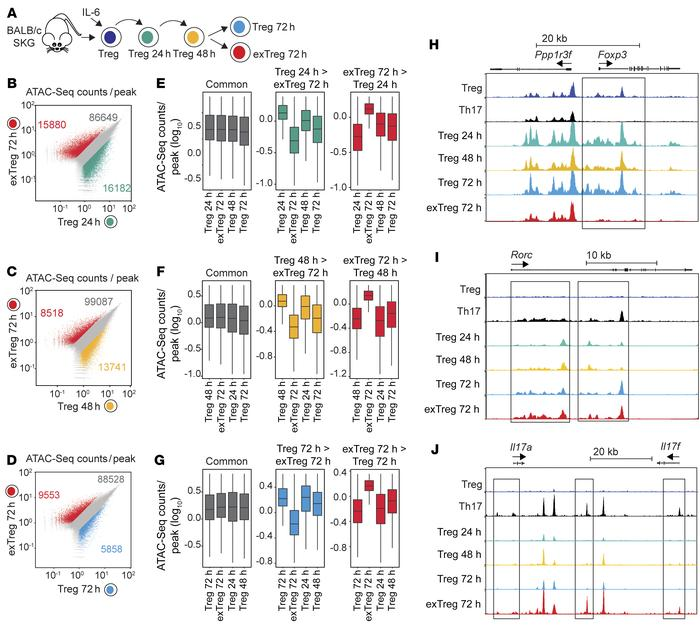 exTregs display a unique chromatin landscape. (A–J) ATAC-Seq for chromat...