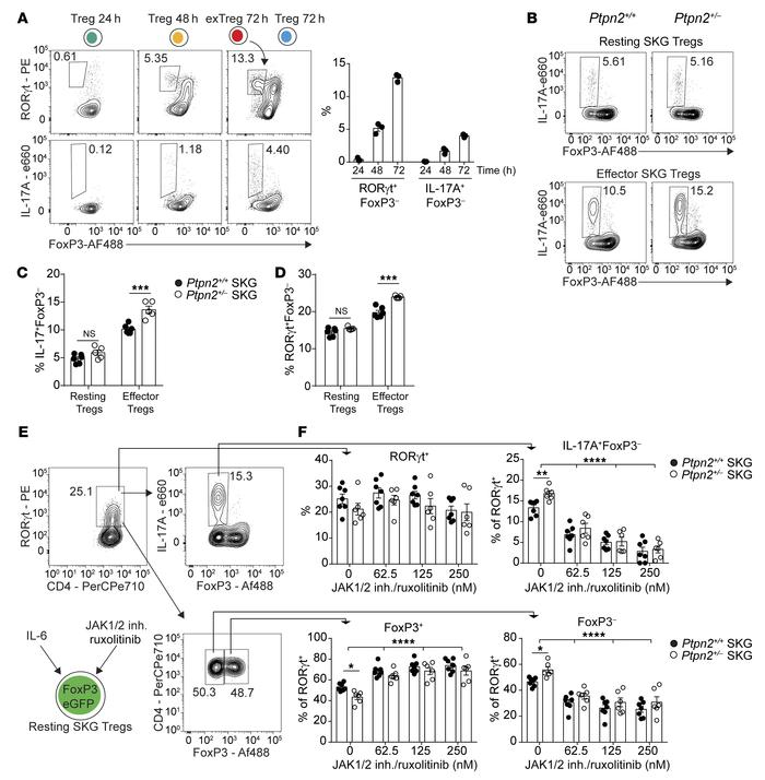 Ptpn2 haploinsufficiency promotes conversion of RORγt+ effector Tregs. ...