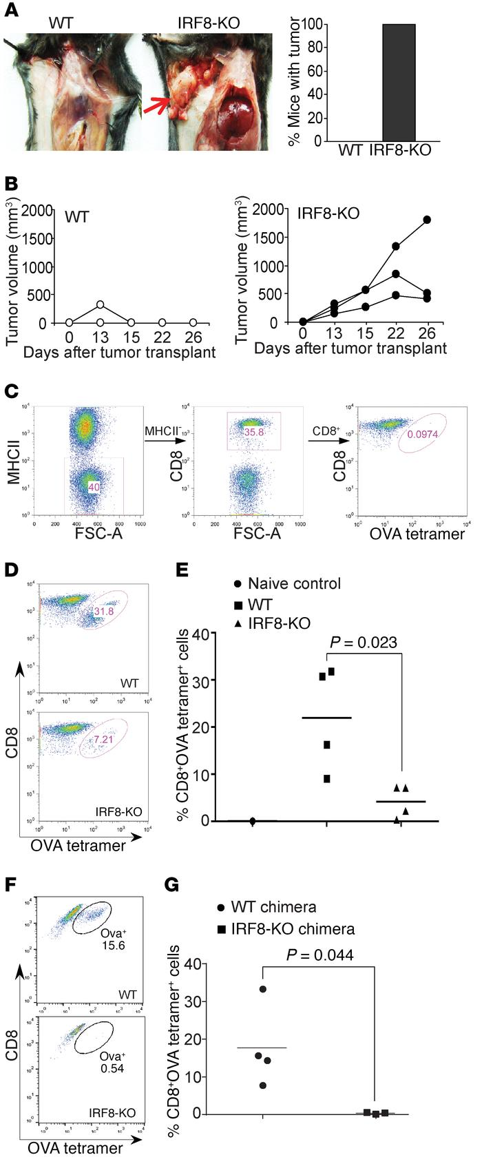 IRF8 is essential for tumor rejection and antigen-specific CD8+ T cell a...