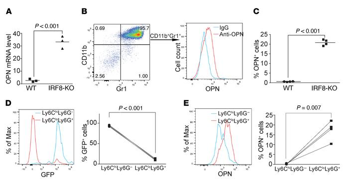 IRF8 represses the expression of OPN expression in myeloid cells. (A) RN...