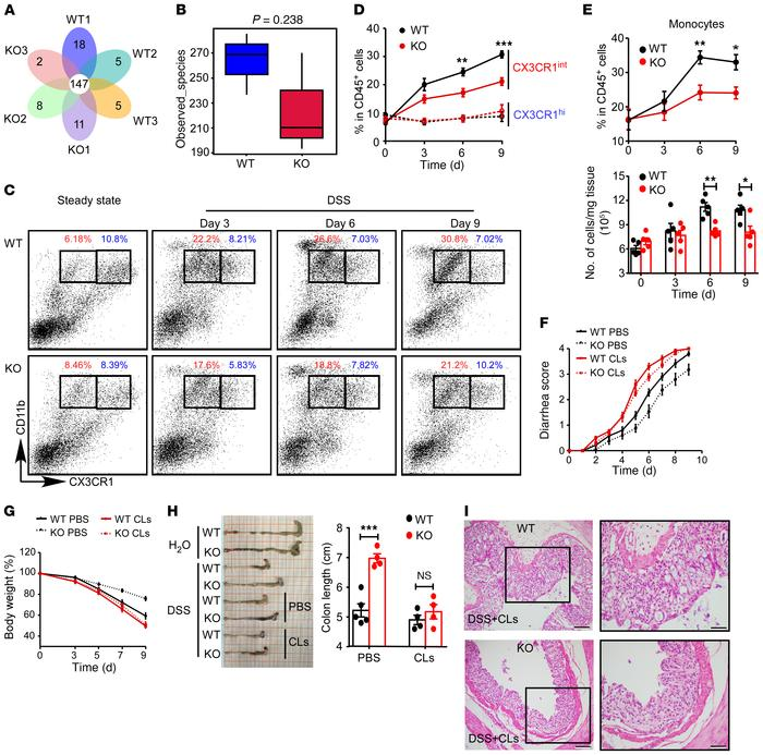 Fbxw7 deficiency decreases the accumulation of CX3CR1int proinflammator...