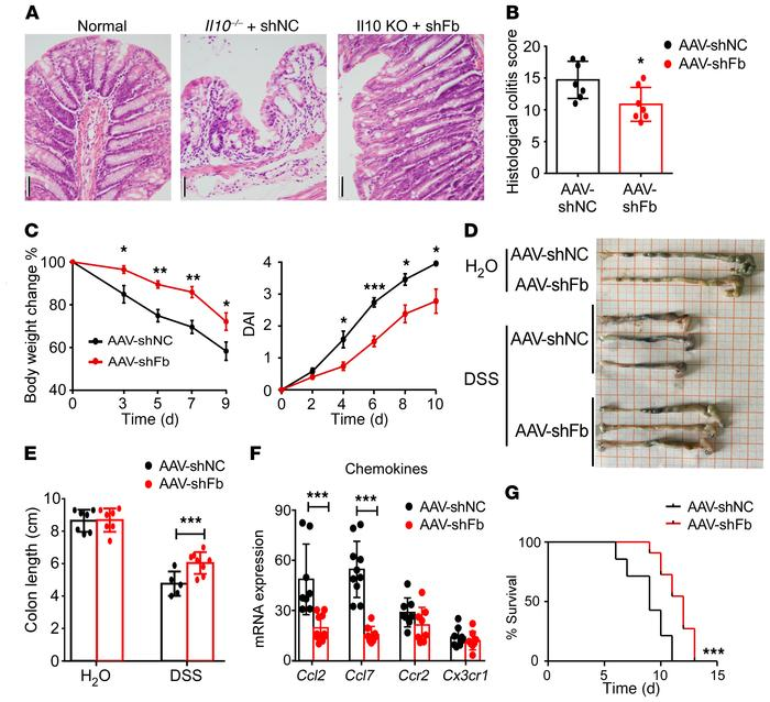 Decreased expression of Fbxw7 relieves experimental colitis. (A) H&E...