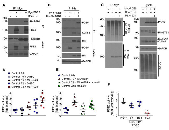 Molecular mechanism of RhoBTB1 on PDE5. (A and B) Reciprocal co-IP of PD...