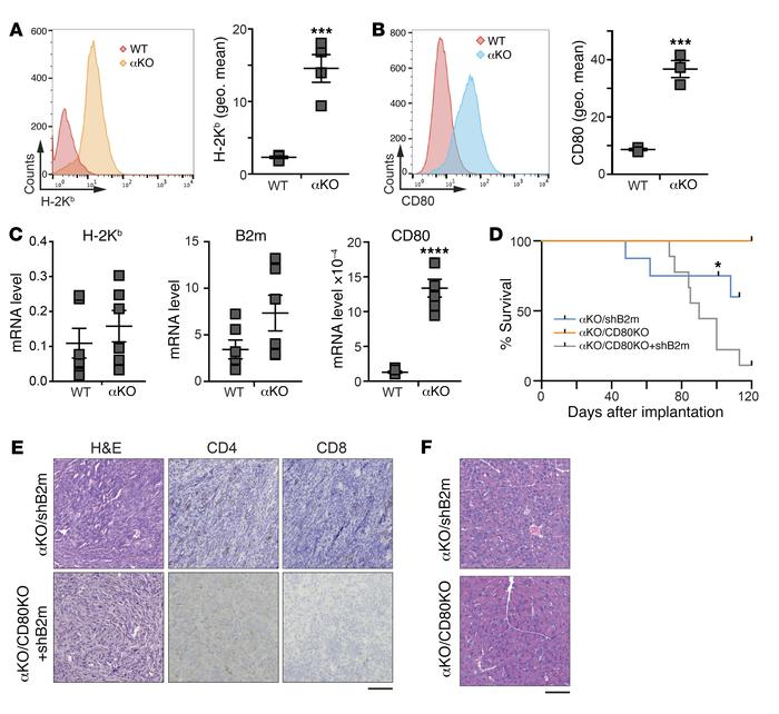 PIK3CA regulates cell surface expression of MHC I and CD80 in KPC cells....