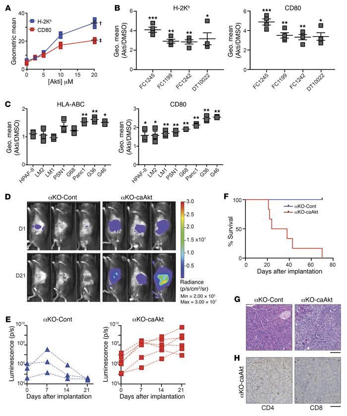 PIK3CA regulation of CD80 and MHC I is mediated by AKT signaling. (A) WT...