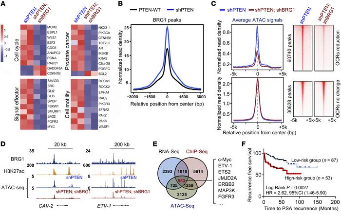 BRG1 remodels the chromatin configuration to influence a protumorigenic ...