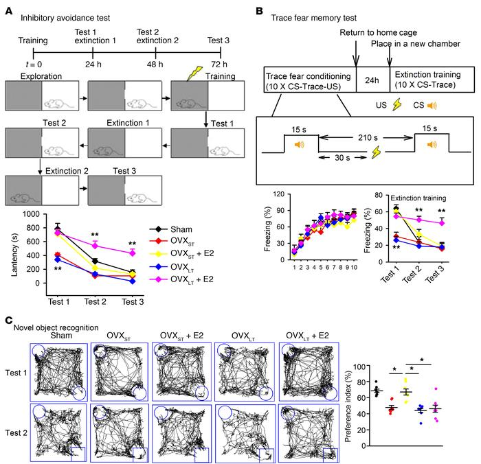 Impaired memory extinction in OVXLT mice treated with E2. (A) Schematic ...