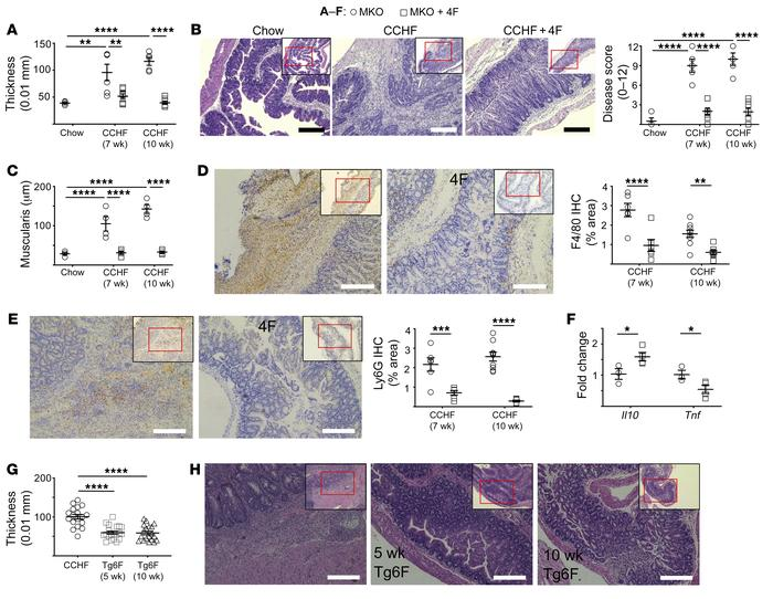 APOA1 mimetics inhibit the development of intestinal inflammation in the...