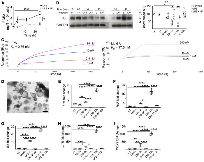 4F inhibits the LPS-mediated proinflammatory response of human macrophag...