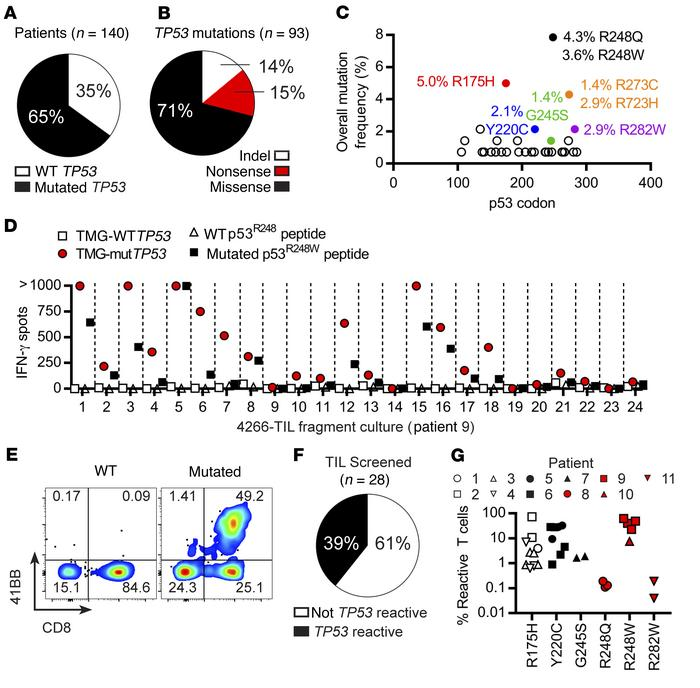 TP53 hot spot mutations are immunogenic and elicit intratumoral T cell ...