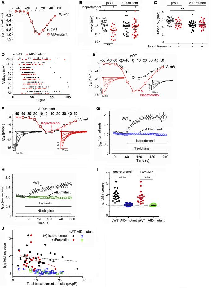 AID-mutant CaV1.2 channels lack β-adrenergic regulation. (A) Normalized ...
