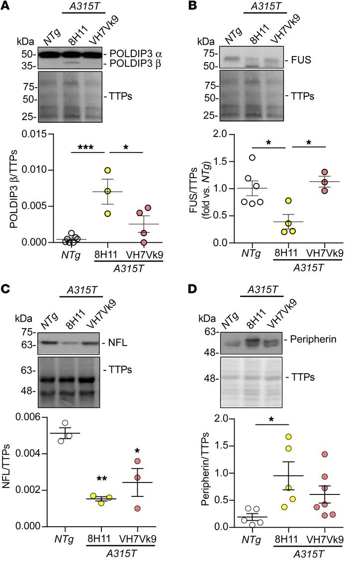 scAAV2/9-mediated delivery of scFv restores TDP-43 functions in the lumb...