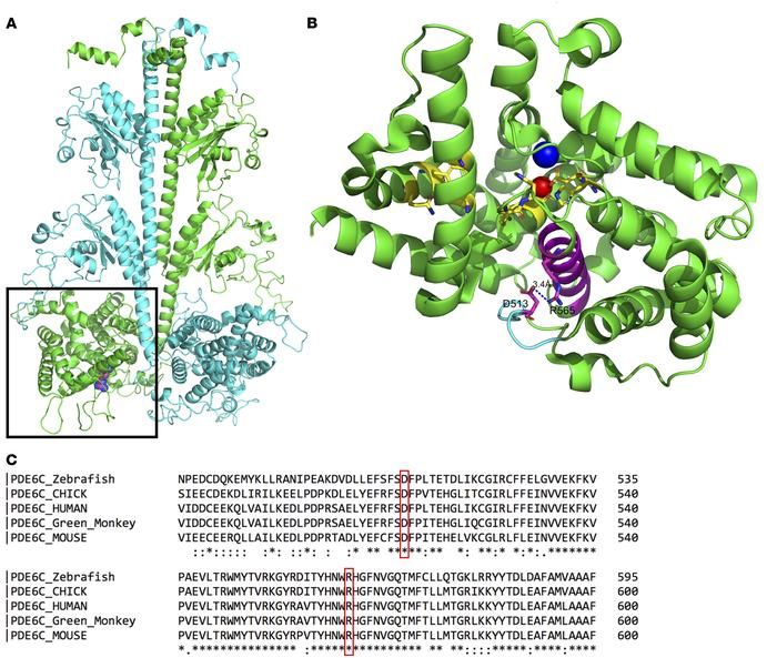 The R565Q mutation in PDE6C alters a conserved arginine in the catalytic...