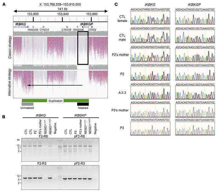 Genomic strategies to identify IKBKG variants. (A) Comparison of WGS map...