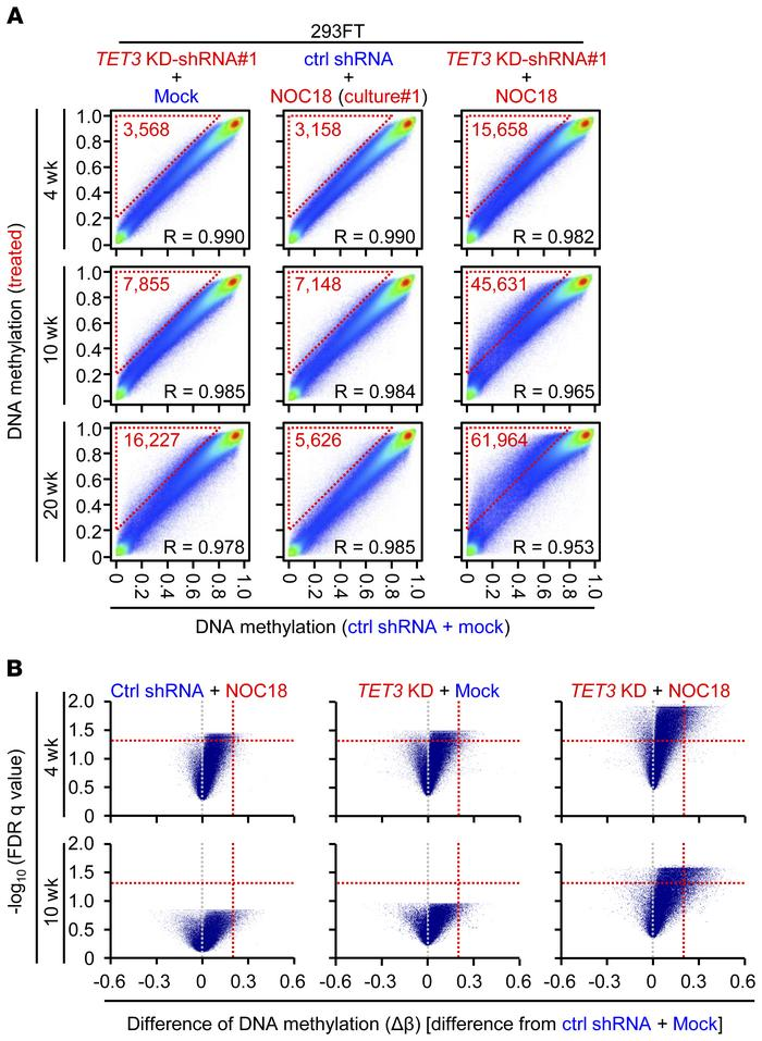 Induction of aberrant DNA methylation by a combination of TET3 repressio...