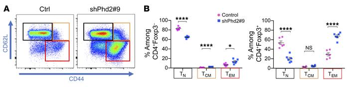 Identification of naive and memory T cells in shPhd2#9 mice. Dot plots a...