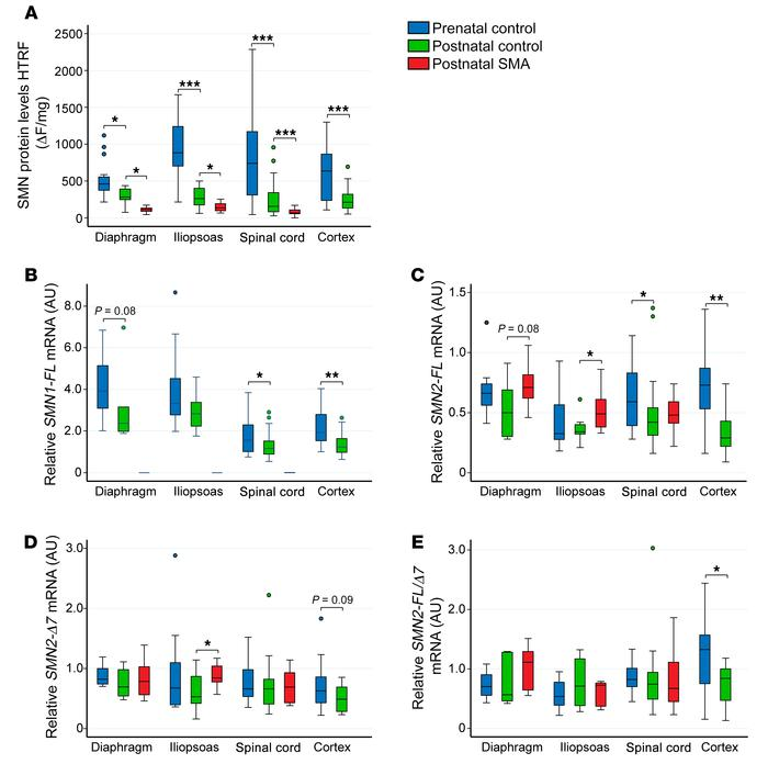 Developmental expression patterns of SMN protein and mRNA are similar in...