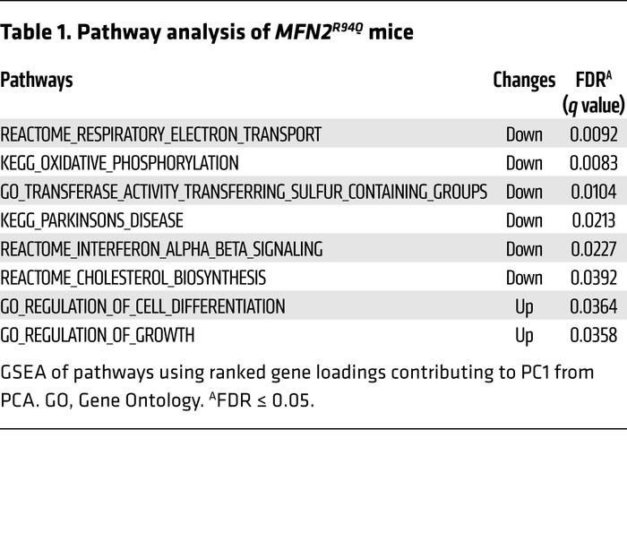 Pathway analysis of MFN2R94Q mice