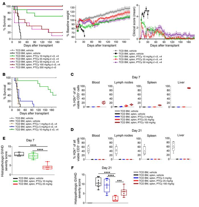 In a T cell–replete, MHC-haploidentical, murine HCT model (B6C3F1→B6D2F1...