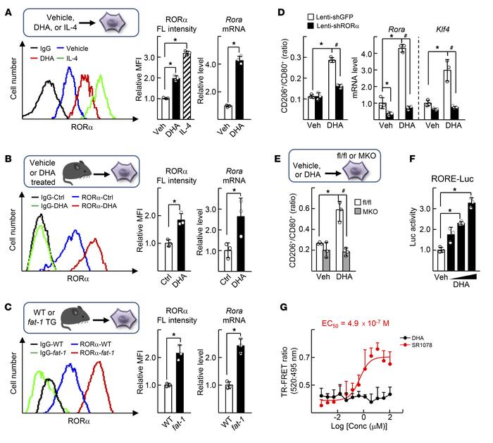 DHA increases expression of RORα and induces M2 polarity switch in the l...