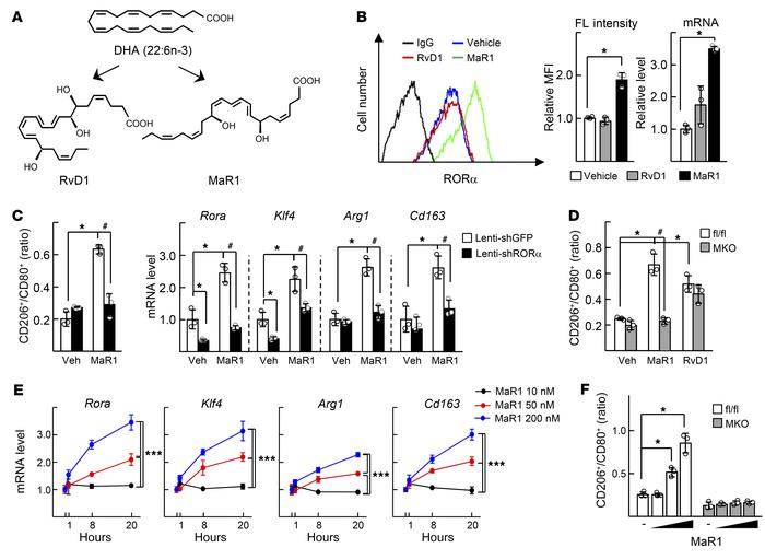 MaR1 enhances expression of RORα and M2 polarity switch in the liver mac...