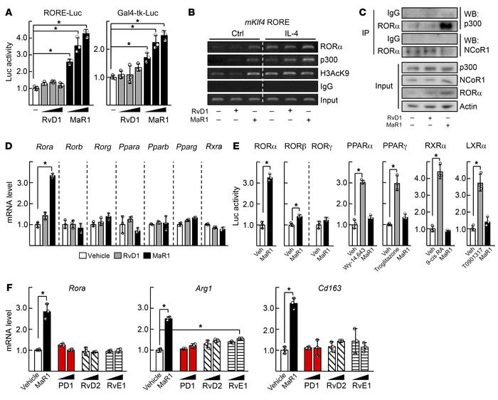 MaR1 is specific for transcriptional activation of RORα. (A) Raw 264.7 c...