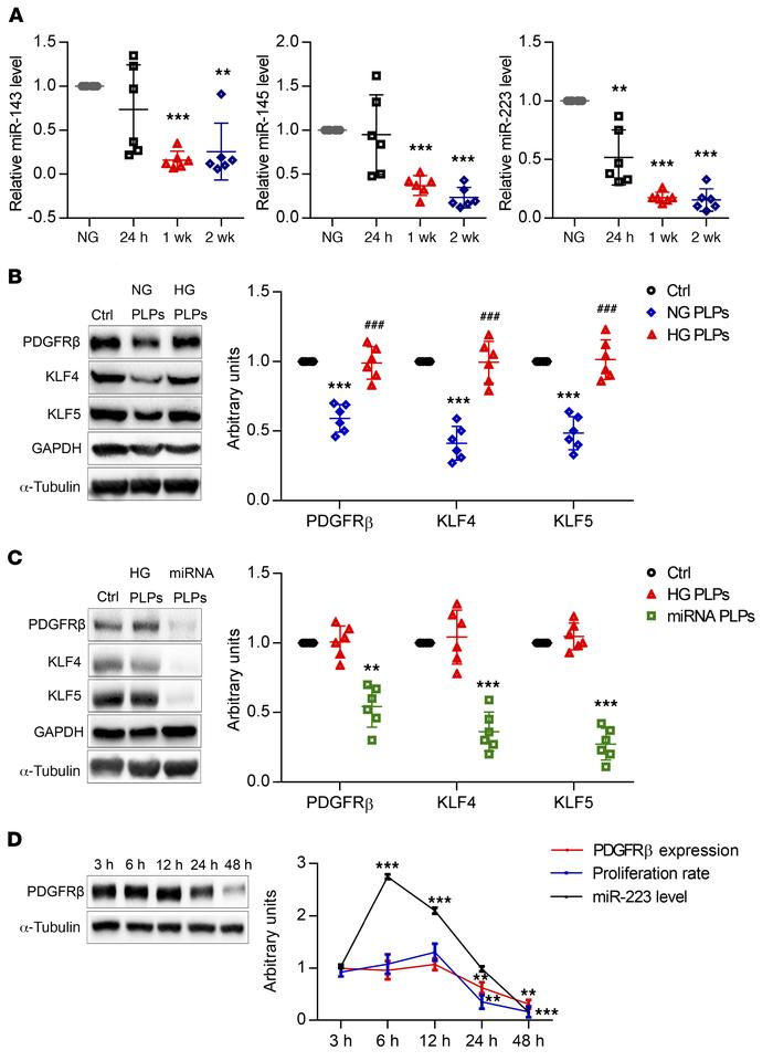 Incorporation of platelet-derived miRNAs is required for inhibiting VSMC...