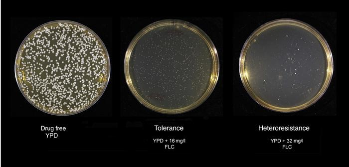 Phenotypes of tolerance and heteroresistance. Cn (106) cells from the H9...
