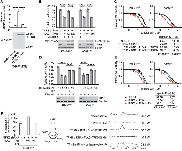 IP4, the product of ITPKB, confers cisplatin resistance to cancer cells....