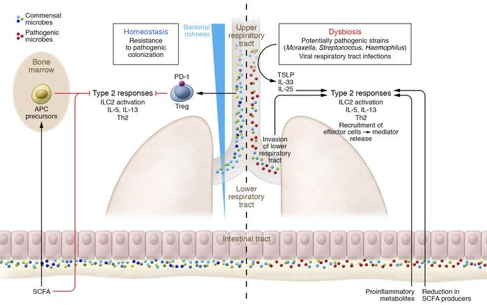 Exposure to a healthy microbiota drives antiinflammatory homeostatic con...