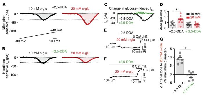 AC activity is required for vascular L-type Ca2+ channel potentiation an...