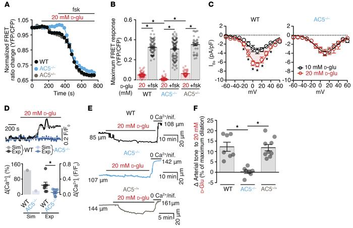 AC5 is necessary for cAMP synthesis, L-type Ca2+ channel potentiation, a...