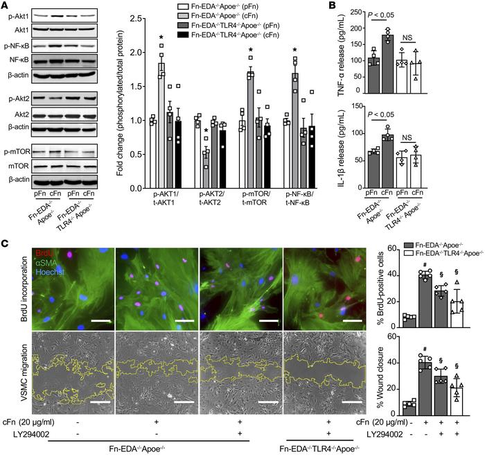 Exogenous Fn-EDA promotes TLR4-dependent Akt1/mTOR signaling. (A) Repres...