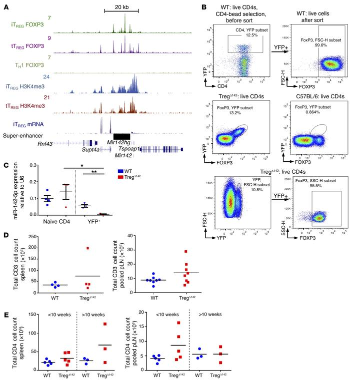 TregΔ142 mouse: validation data. (A) ChIP-Seq binding profiles (reads/mi...