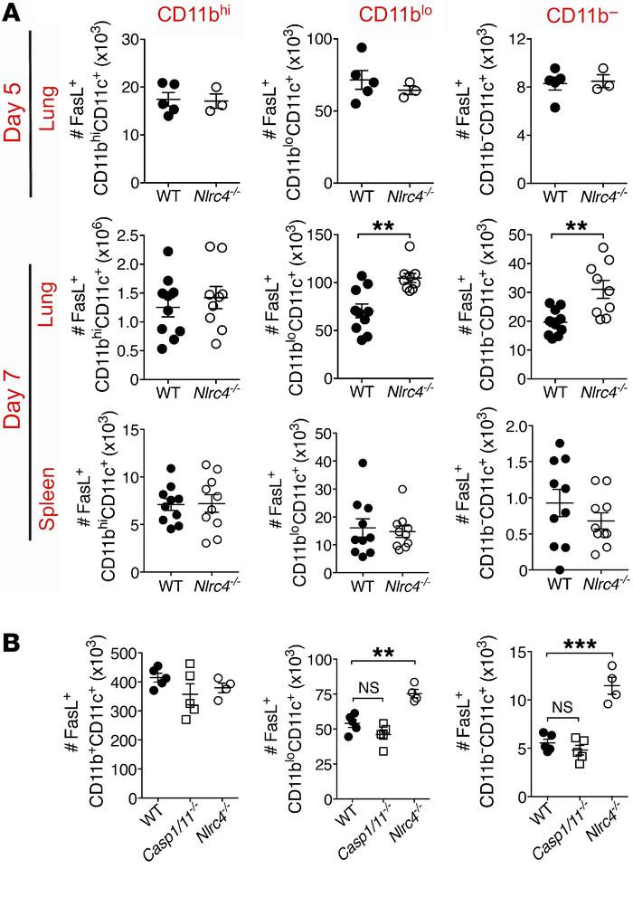Increased FasL+ DCs in the lungs of Nlrc4–/– mice during IAV infection. ...