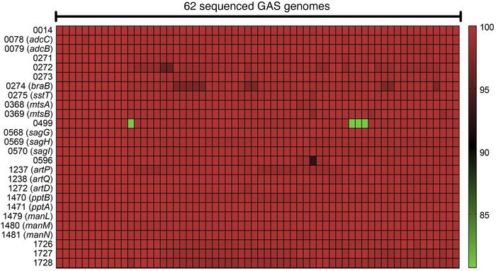 Conservation of the 26 GAS transporter genes among 62 sequenced GAS geno...