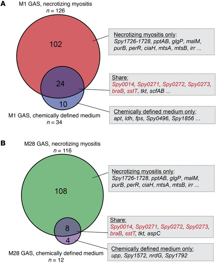 Overlap between GAS fitness genes required for necrotizing myositis and ...