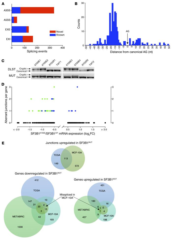 Mutant SF3B1 alters the transcriptome of breast epithelial cells. (A) Cl...