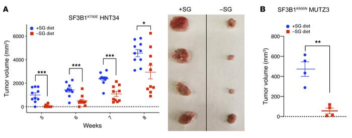 Cancer cells with naturally acquired SF3B1 mutation show vulnerability t...