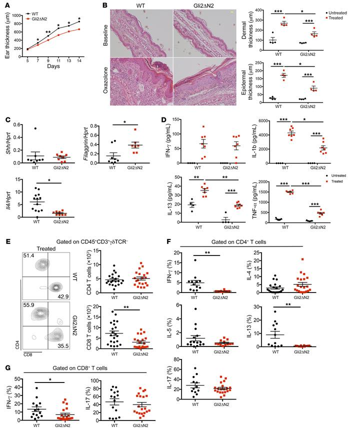 Conditional Gli2-mediated transcription in T cells reduces induction of ...