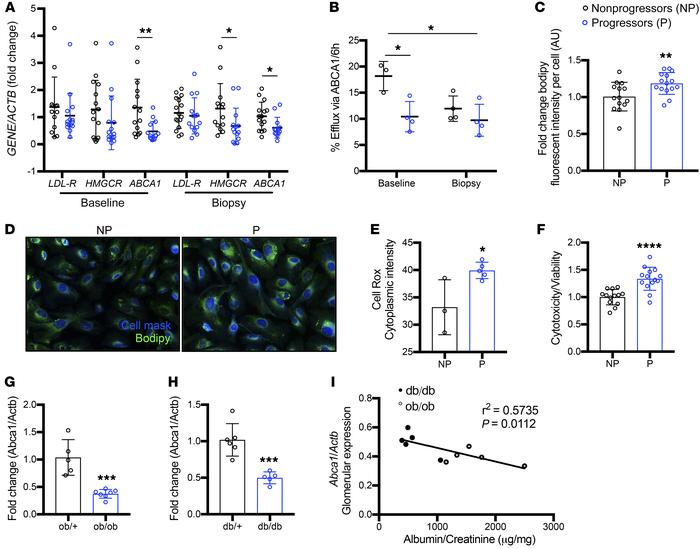 P sera–treated podocytes show reduced ABCA1 expression and function asso...
