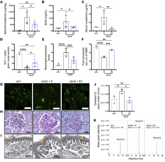 Inhibition of cardiolipin peroxidation ameliorates podocyte injury and D...