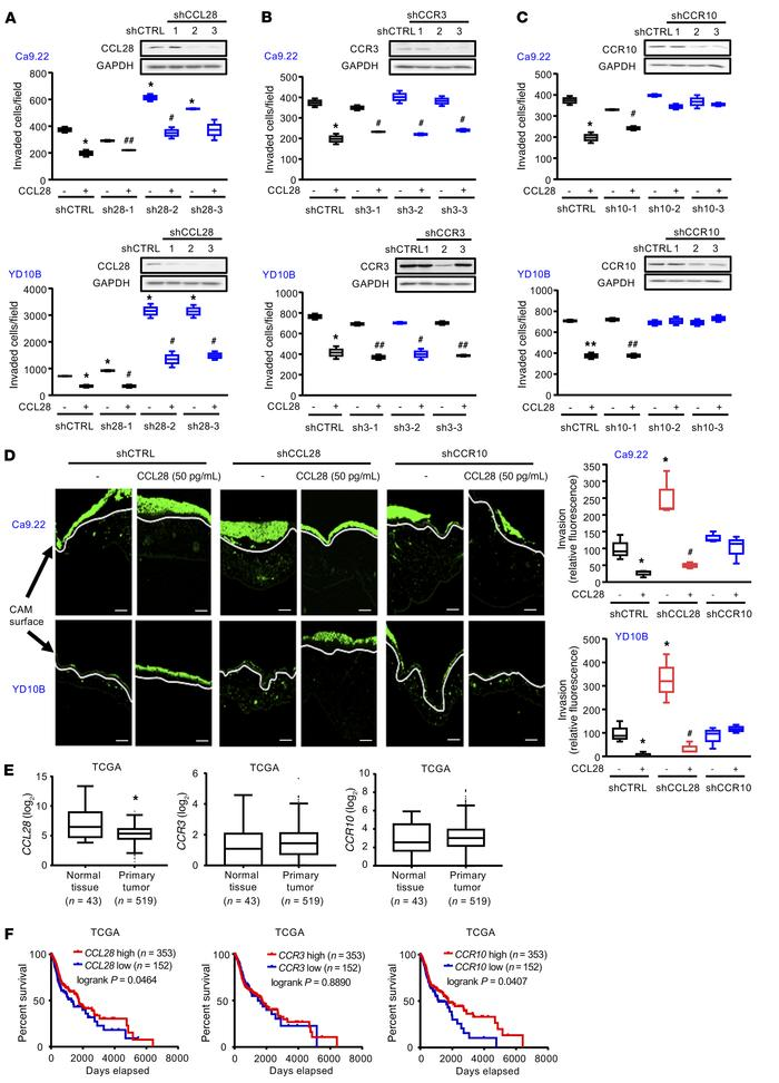 CCL28 inhibits OSCC cell invasion via CCR10 and is associated with carci...