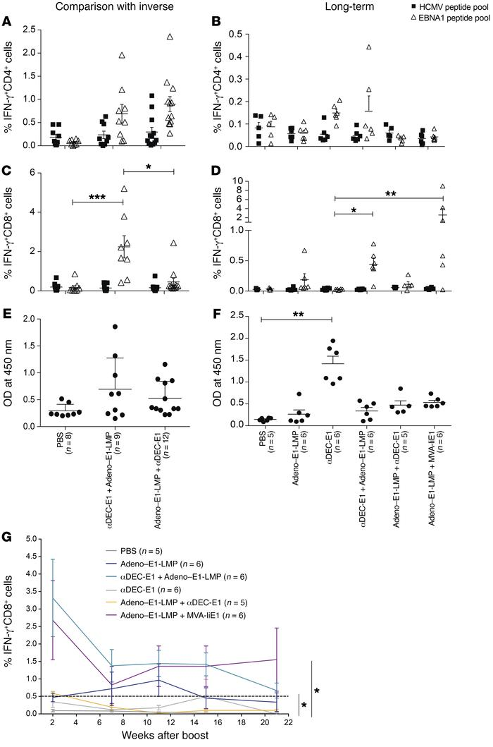 Persistent and potent EBNA1-specific CD8+ T cell responses upon comprehe...