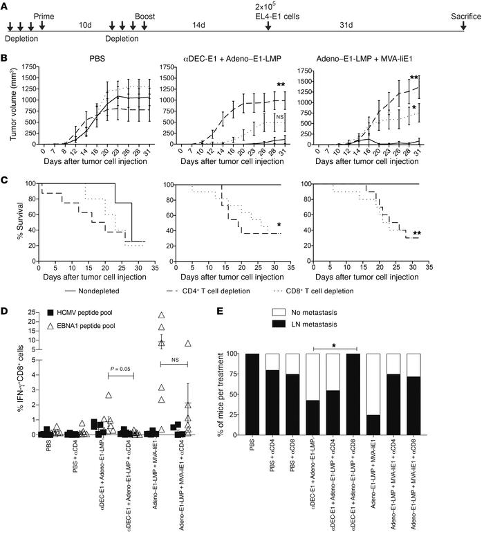Dependence on CD4+ and CD8+ T cell populations for protection from EL4-E...