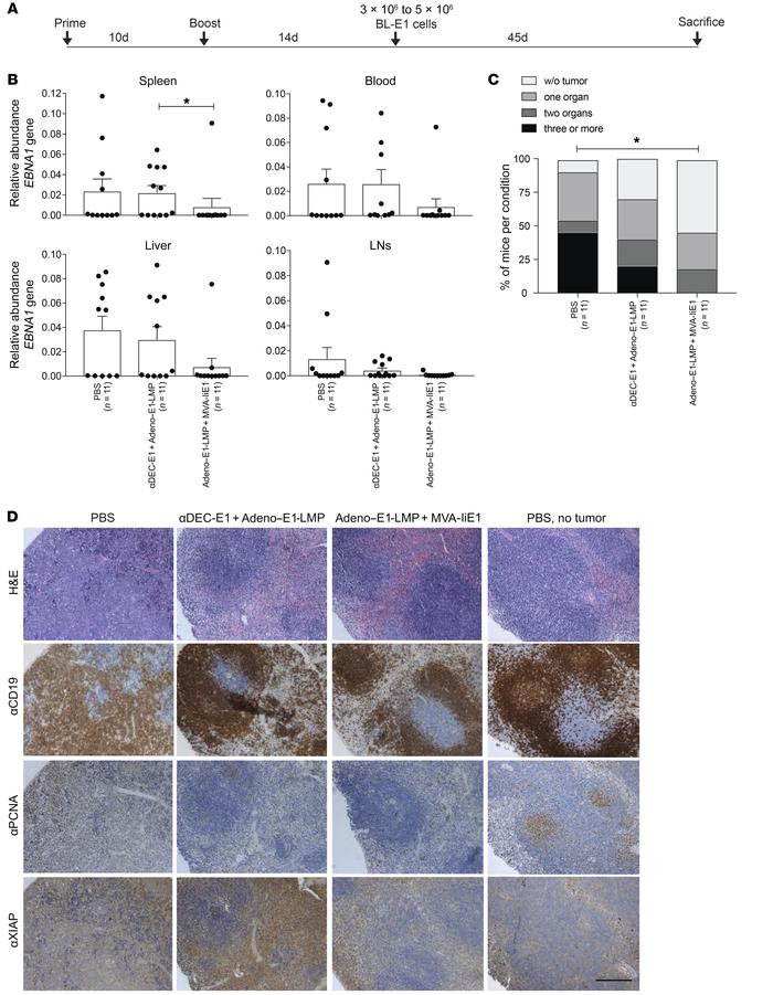 Protection from EBNA1-induced B cell lymphoma challenge by heterologous ...