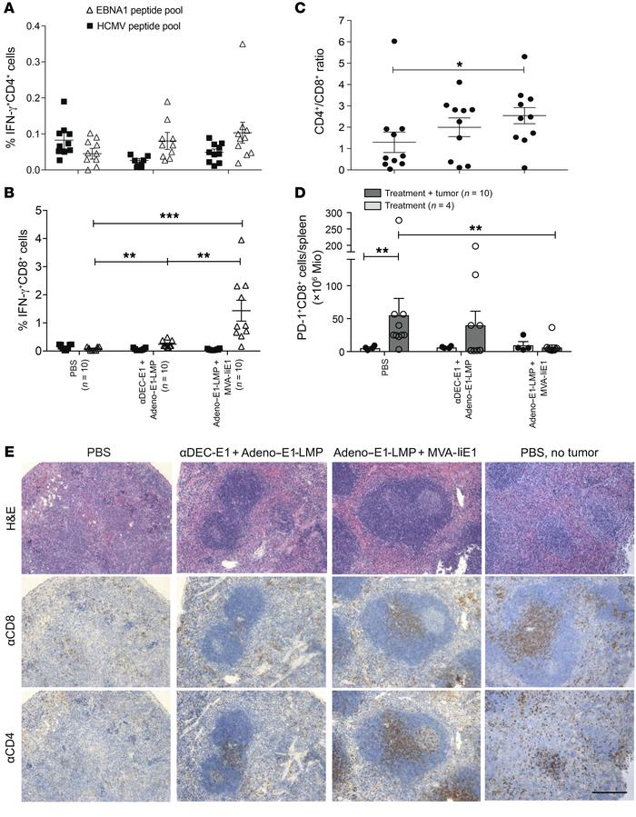 Characteristics of T cell responses toward EBNA1-induced B cell lymphoma...